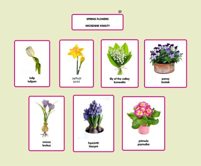 spring flowers wiosenne kwiaty